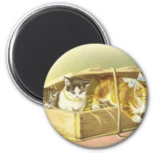 Kitty Fridge Magnet