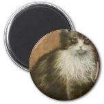 Kitty Fridge Magnets