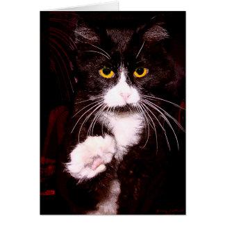 Kitty Greetings Card