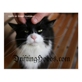Kitty Hobo Postcard