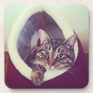 Kitty Hut Close Up Photo Beverage Coaster