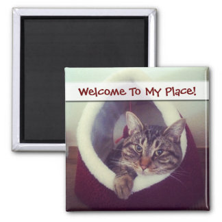 Kitty Hut Close Up Photograph 2 Inch Square Magnet