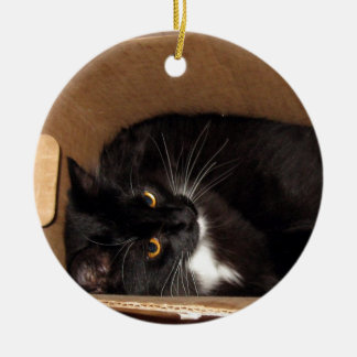 Kitty in a Box - Photograph Ornaments