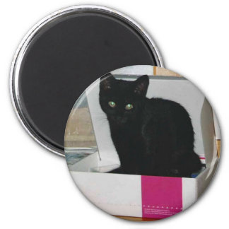 Kitty in Box (color) 2 Inch Round Magnet