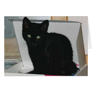Kitty in Box (color) Card