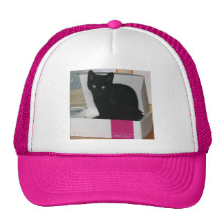 Kitty in Box color Mesh Hat