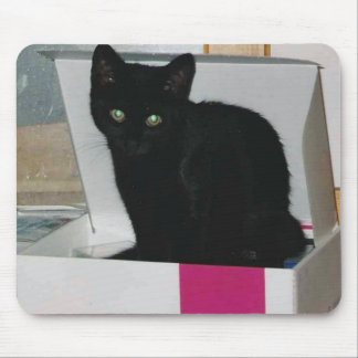 Kitty in Box (color) Mouse Pads
