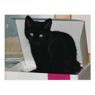 Kitty in Box (color) Postcard