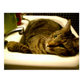 kitty in sink postcard