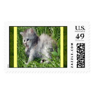 Kitty in the Grass Postage Stamps