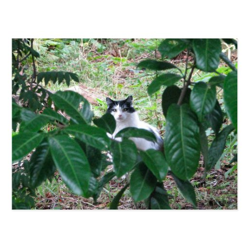 Kitty In The Leaves Postcard
