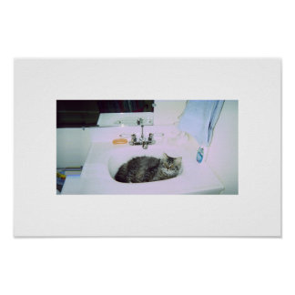 kitty in the sink poster