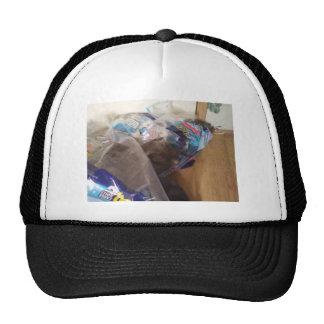 Kitty in toilet paper wrapper hats