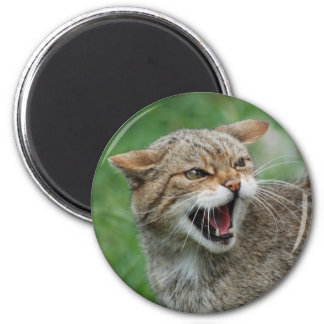 Kitty Is Not Amused magnet
