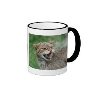 Kitty Is Not Amused mug