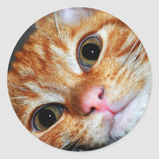 Kitty Kat Classic Round Sticker