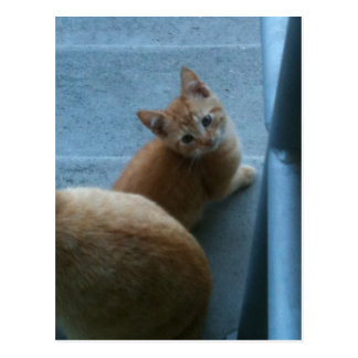 Kitty Kat iPhone 4 Case Postcard