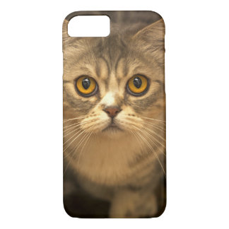 Kitty Kat Kitten Apple iPhone 7 Case