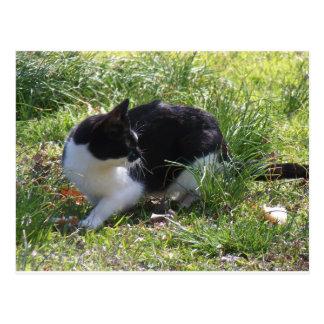 Kitty Kat Postcard