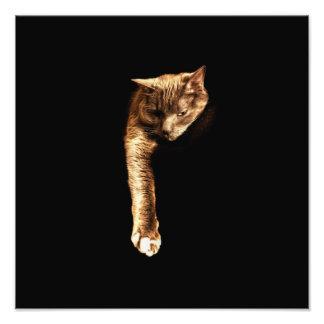Kitty Kitty Photo Print