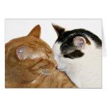 kitty love card