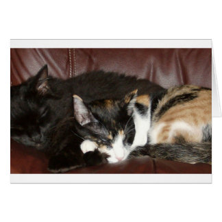 Kitty Love Greeting Cards
