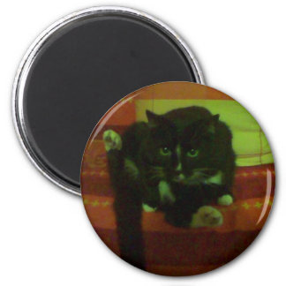 kitty magnets