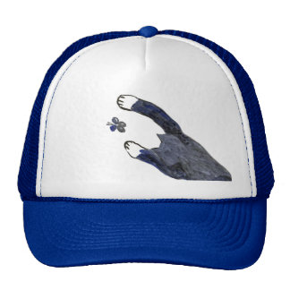 Kitty Makes a Stretching Leap toward Flutter-by Trucker Hat