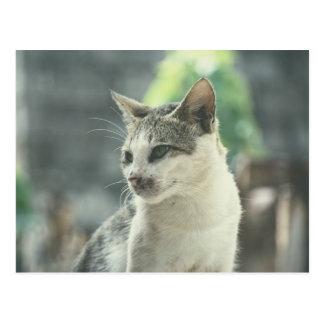Kitty Nicka Postcard