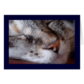 Kitty Notecard