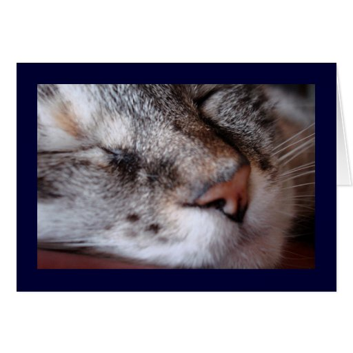 Kitty Notecard Stationery Note Card