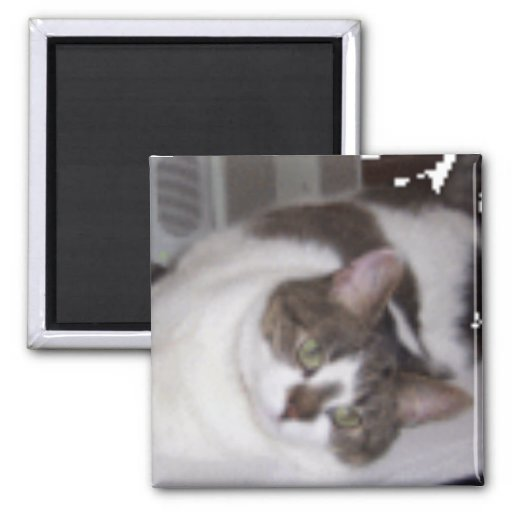 Kitty Paperweight Magnet