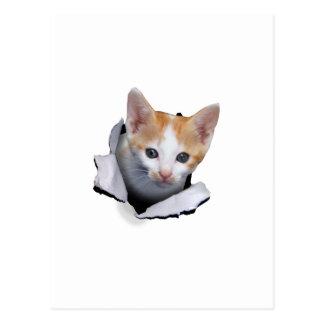 Kitty pop postcard