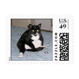 Kitty Postage