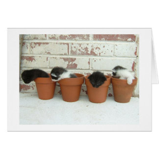 Kitty Pots Note Cards