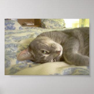 kitty print
