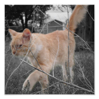 Kitty Romeo In The Fields... Poster