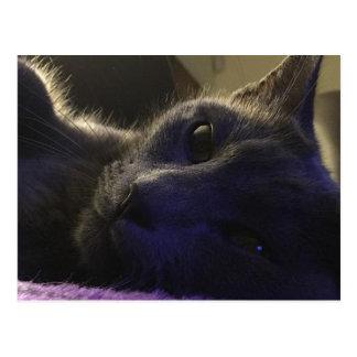 Kitty Says Hello Postcard