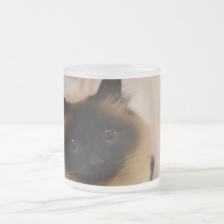 Kitty Siamese Cute Cat Pet Purr Meow Destiny 10 Oz Frosted Glass Coffee Mug
