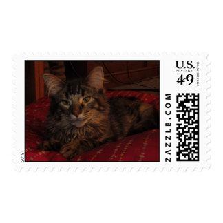 Kitty Sittin Pretty Postage Stamps