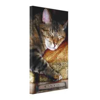 Kitty Sleep Book Wrapped Canvas Stretched Canvas Print