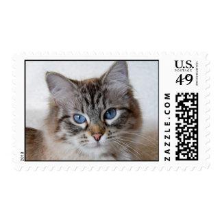 Kitty Stamp