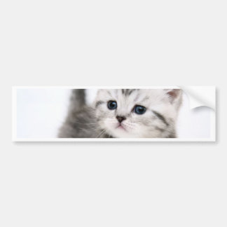 kitty time bumper stickers