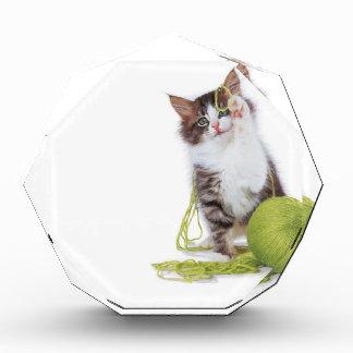 Kitty Yarn Play Acrylic Award