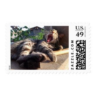 Kitty yawns postage