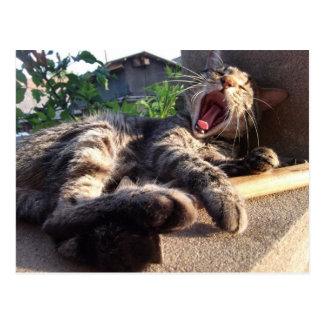 Kitty yawns post cards
