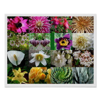 KIW Sparks: Floral Outbursts Poster