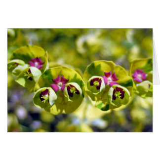 KIW Sparks: Green & Flowering 105 Greeting Cards