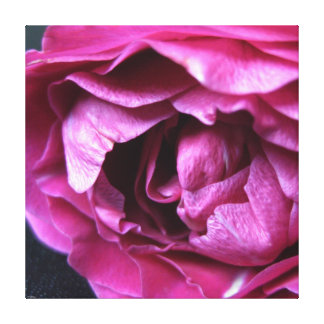 KIW Sparks: Wild Rose Gallery Wrapped Canvas
