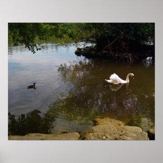 KIW Sparks: Z Silken Swan Poster
